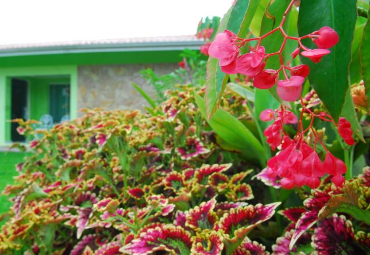 fotos jardins pequenos residenciais:Decoração de Jardins Residenciais