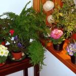 Jardins-de-Inverno 10