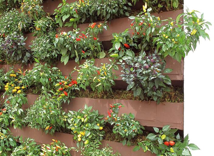 Como Fazer um Jardim Vertical Dicas, Fotos  Guia Saúde