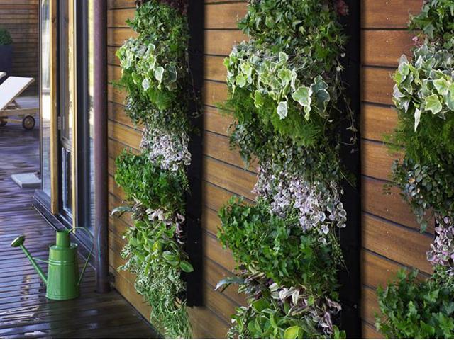 jardim vertical fotos : jardim vertical fotos:Fazer um Jardim Vertical: Dicas, Fotos Como Fazer um Jardim Vertical