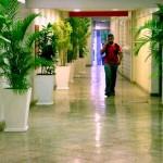 dicas-de-plantas-para-ambientes-fechados