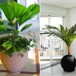dicas-de-plantas-para-ambientes-fechados-3
