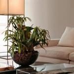 dicas-de-plantas-para-ambientes-fechados-4
