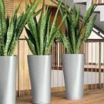 dicas-de-plantas-para-ambientes-fechados-5