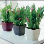 dicas-de-plantas-para-ambientes-fechados-6
