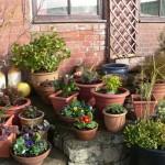 jardim-pequeno-4