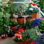 jardim-pequeno-5