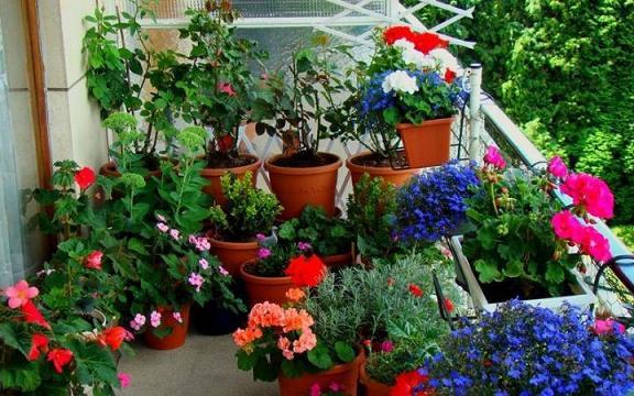 enfeites para jardins pequenos: pequeno e não esqueça de regá lo sempre para as plantas não