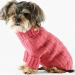roupas-para-cachorro-no-inverno