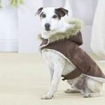 roupas-para-cachorro-no-inverno-2