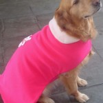 roupas-para-cachorro-no-inverno-3