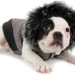 roupas-para-cachorro-no-inverno-4