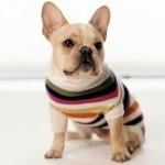 roupas-para-cachorro-no-inverno-5