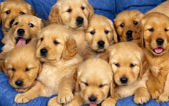 Nomes de Cachorros e Seus Significados