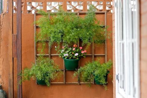 Como Fazer um Jardim Vertical: Dicas, Fotos