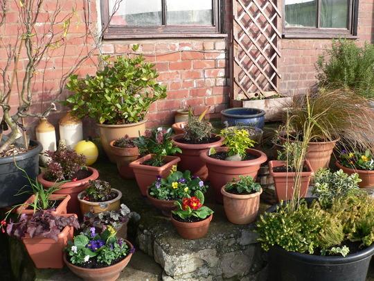 Jardins Pequenos: Saiba como Montar em Casa, Dicas para Decoração